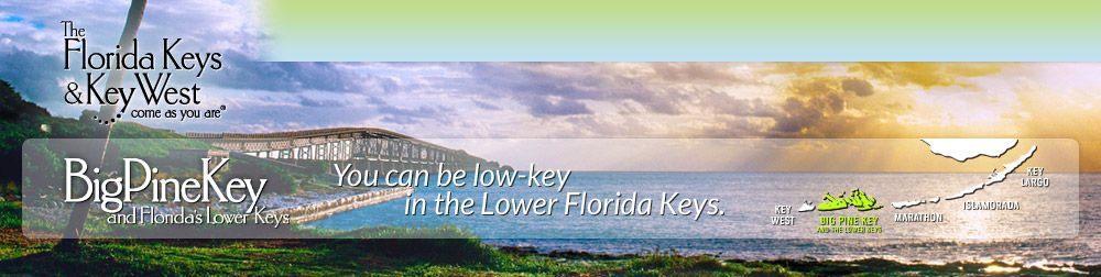 Lower Keys Pine Key Hotels Looking For That Perfect Hotel
