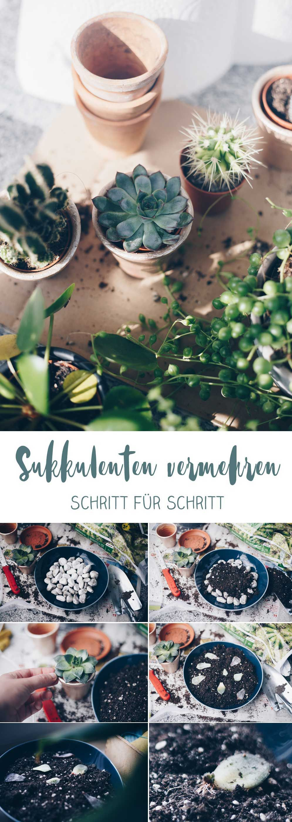 DIY Sukkulenten vermehren Craft ideas Pinterest