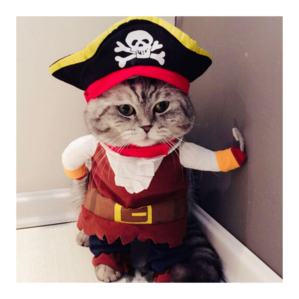 Cute Cat Pirate Costume In 2020 Cute Cat Costumes Funny Cat Clothes Dog Pirate Costume
