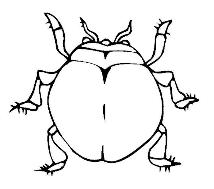 Large Beetle Coloring Pages Coloring Pages Coloring Pages For