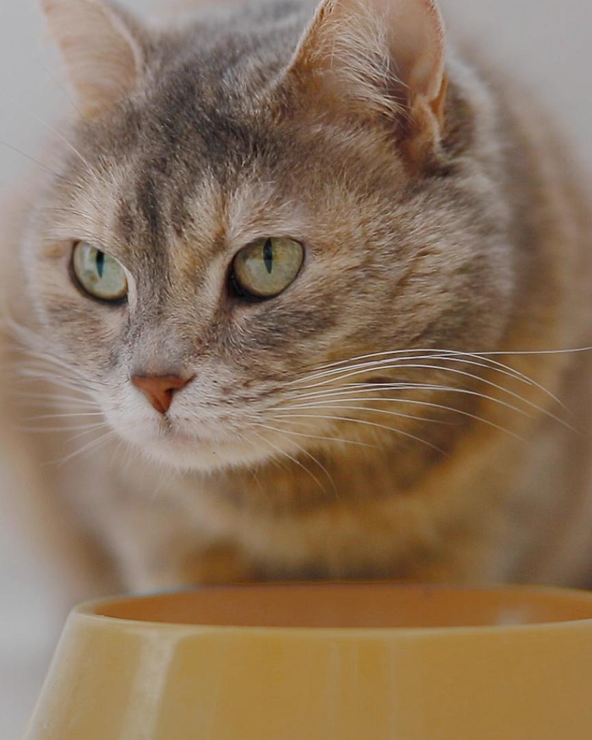 Endlich gesunde Katzennahrung ohne Zucker, Abfälle und Getreide! #katzengeburtstag