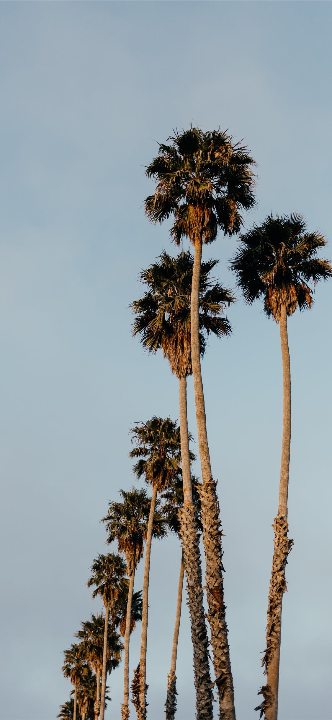 Palms From Santa Cruz California Wallpaper Picture Collage Wall Aesthetic Wallpapers