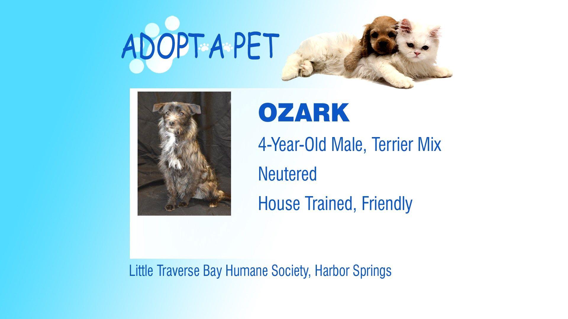 Adopt a Pet Tuesday Remi, Ozark & Betty Northern