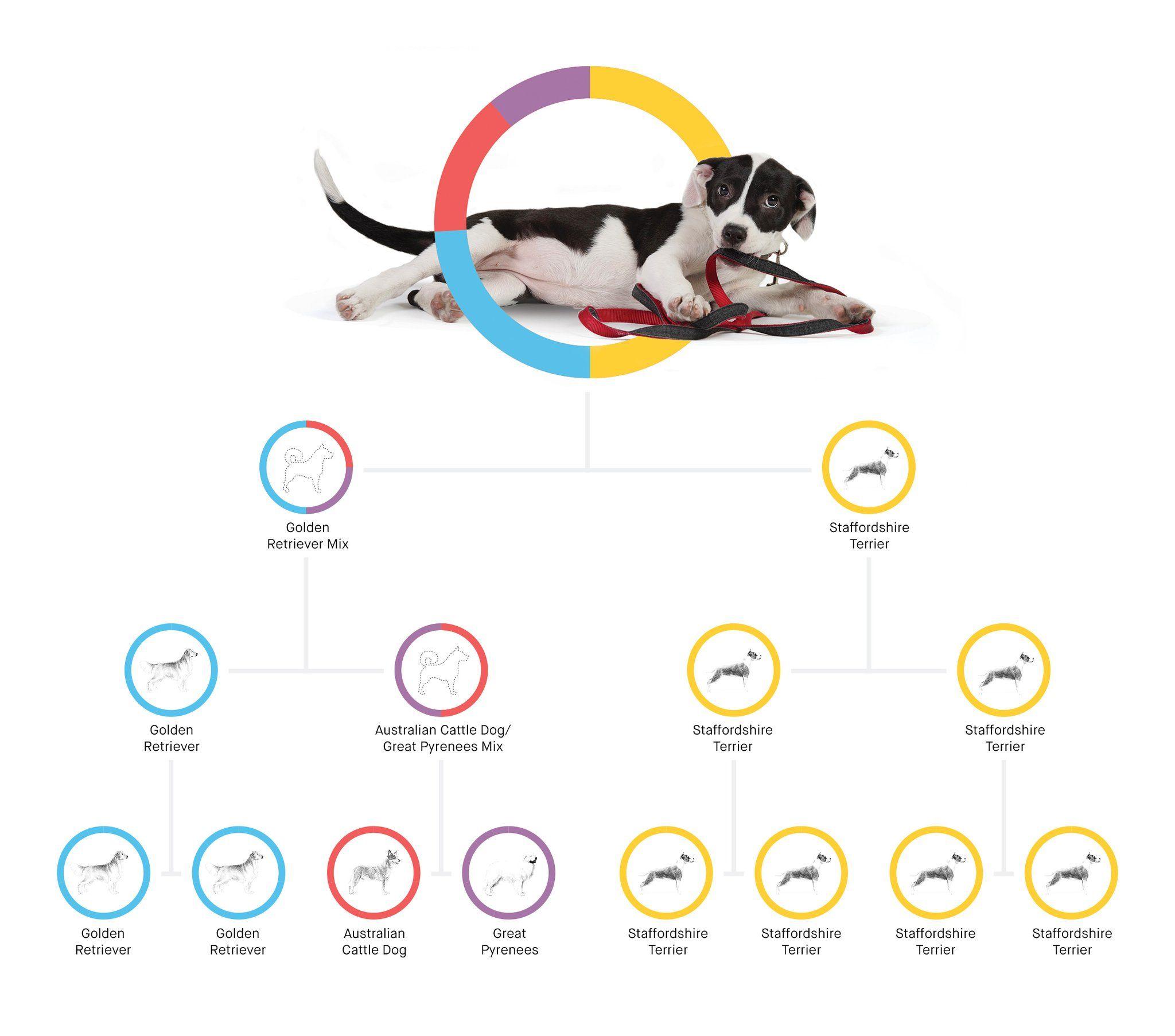 Embark Dog DNA Test Kit Embark Vet Dog dna test, Dog