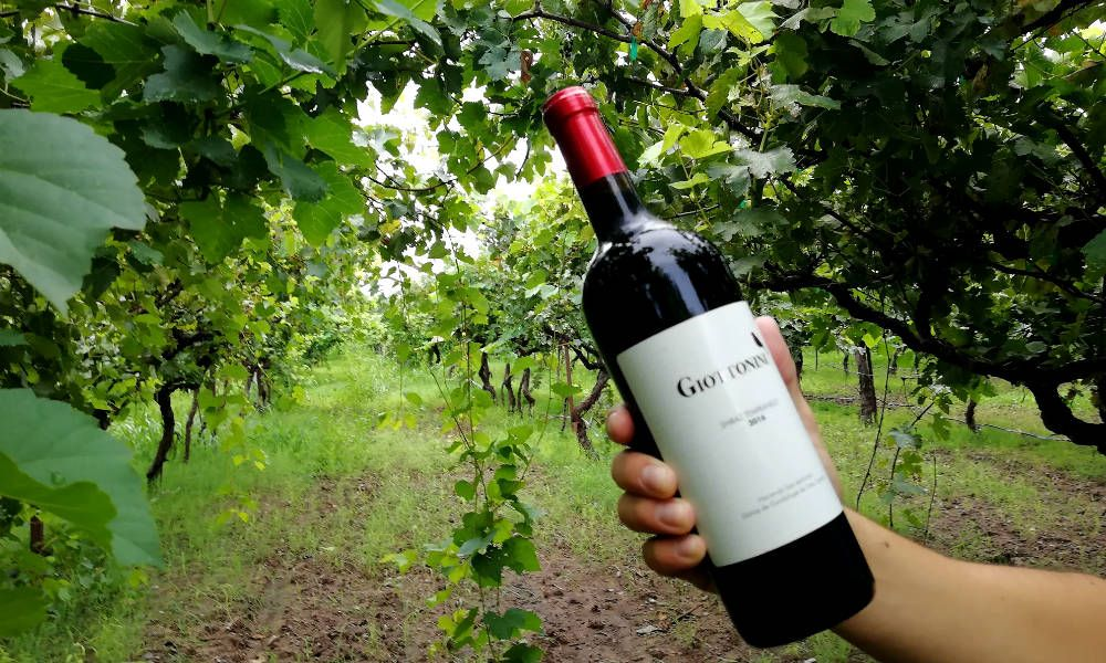El Vino Orgánico De Sonora Llegó Para Quedarse Vino Organico Como Hacer Vino Hacer Vino