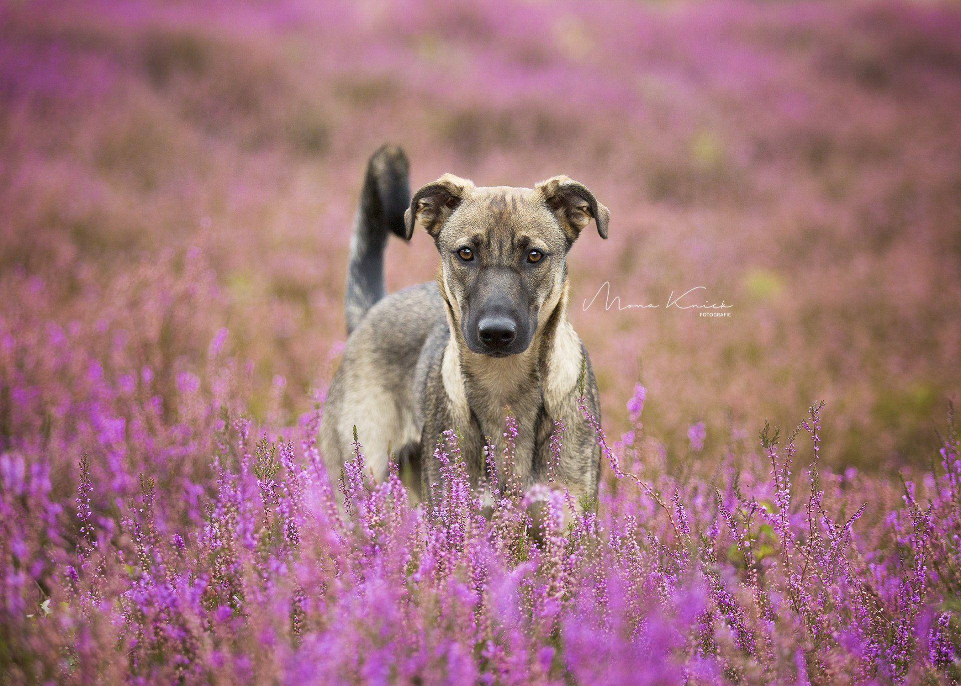 Pin Auf Hundefotografie Mona Knick Fotografie