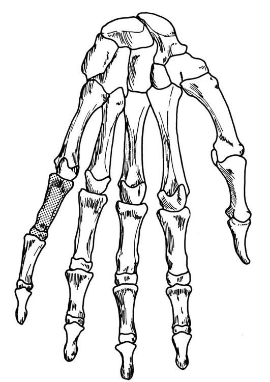 Coloring page hand - skeleton - coloring picture hand ...