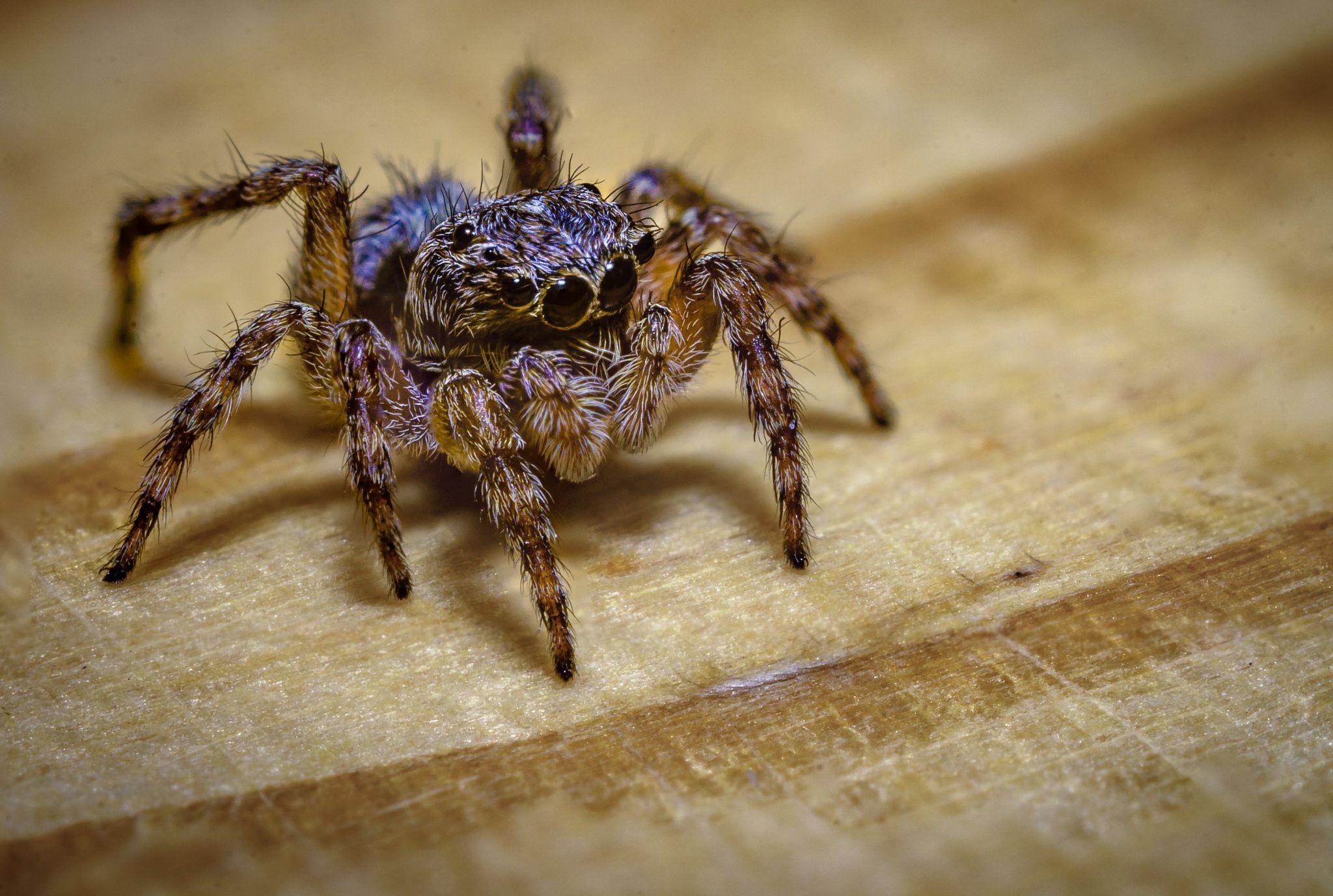 Jumping spider by Marek Weisskopf on 500px