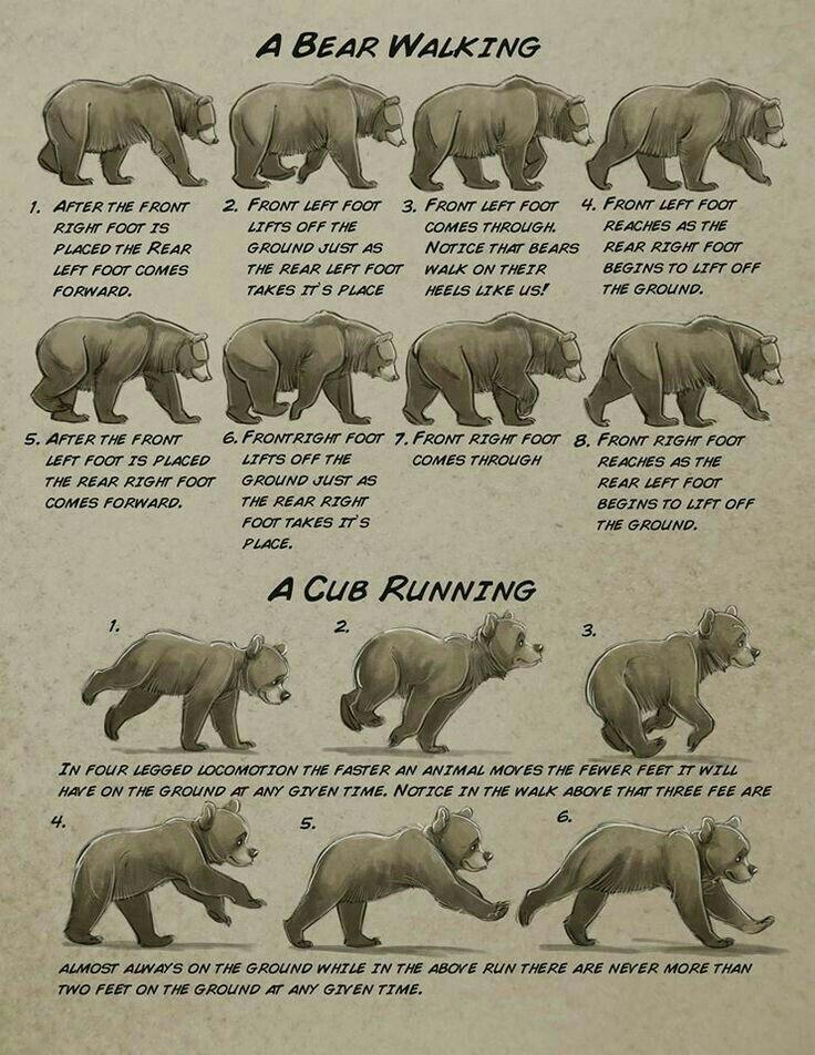 Pin de paul carpenter en Animals | Pinterest | Anatomía animal, Osos ...