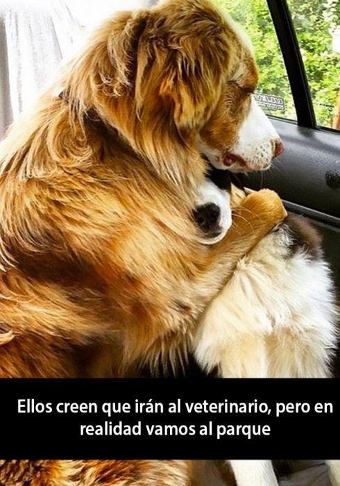 15 Snapchats De Perros Que Te Alegraran El Dia Memes Divertidos Sobre Perros Animales Bonitos Humor De Perros