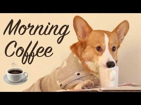 Morning Coffee With Topi The Corgi Youtube Corgi Corgi Funny