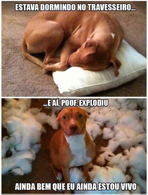 Que Fofo Fotos Engraçadas De Cães Memes Engraçados Do Cão