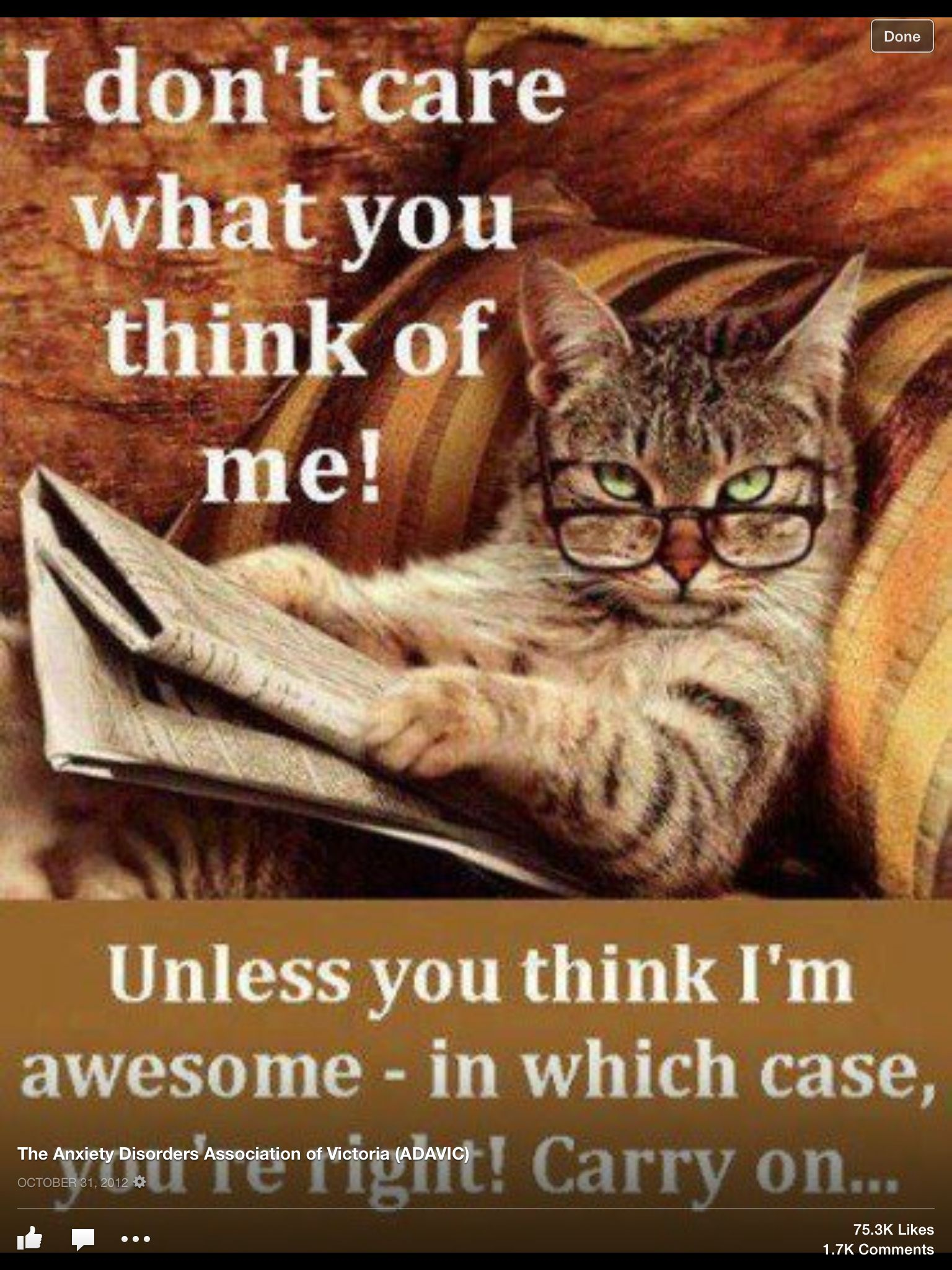 Cat funnies! Kitteh LOLz! I'm sorry (no I'm not) but I