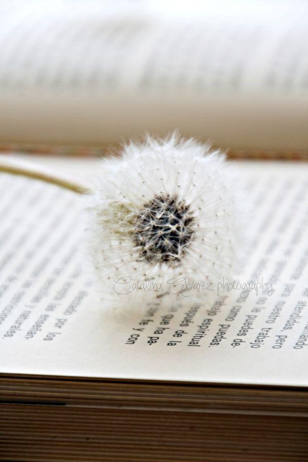 """I libri possono essere pericolosi. I migliori devono avere impressa questa etichetta: """"Questo potrebbe cambiare la vostra vita."""" *Helen Exley*"""