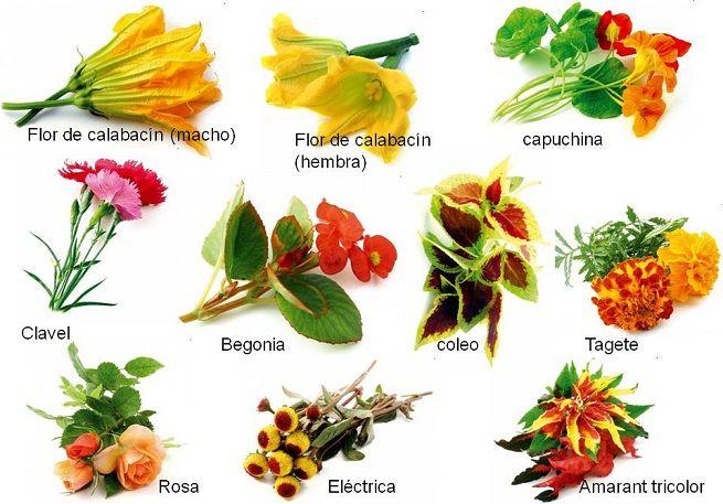 Conoce las flores comestibles mas comunes visual for Plantas ornamentales mas comunes