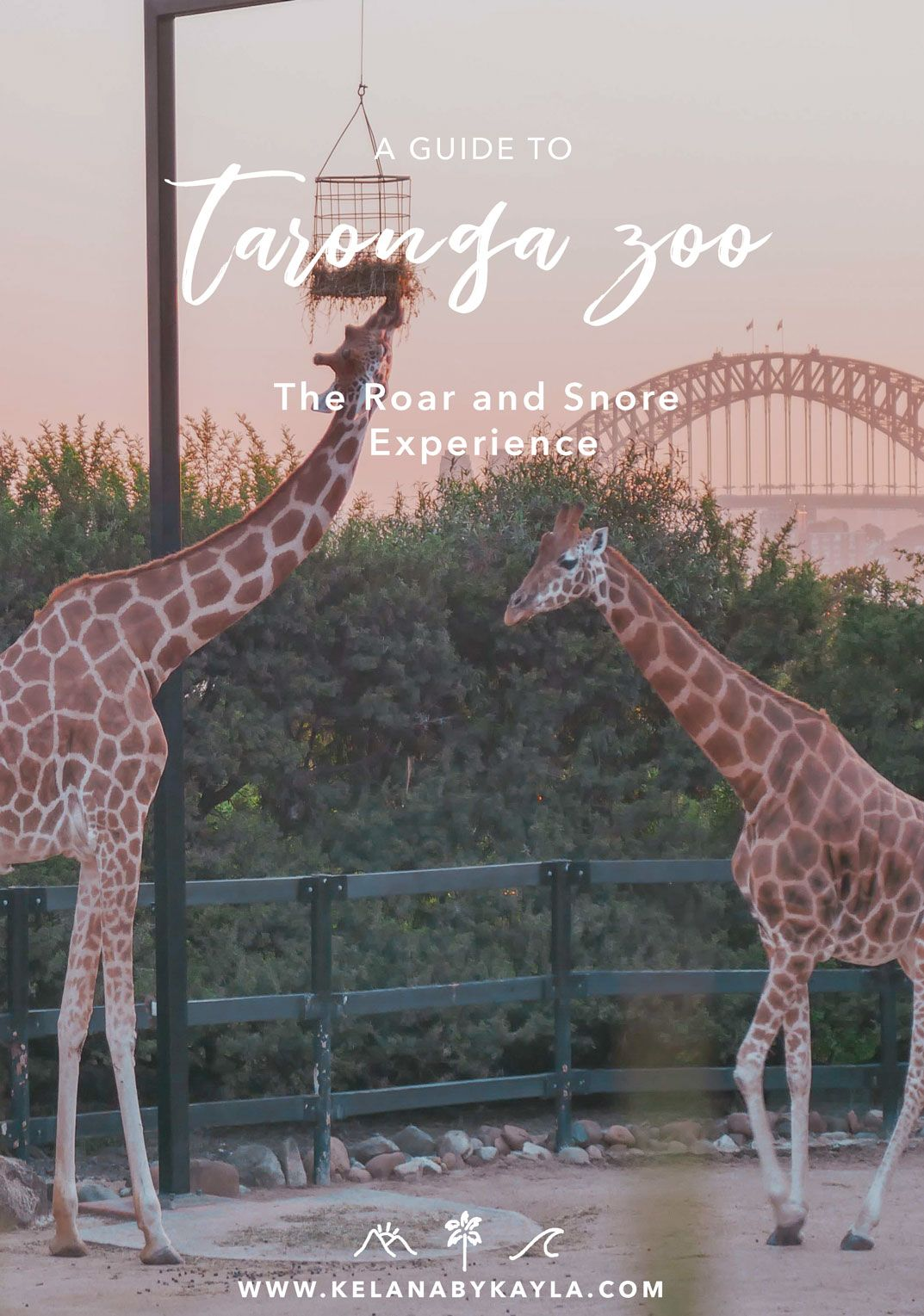 Taronga Zoo The Roar And Snore Experience Oceania Travel Australia Travel Guide Australia Travel