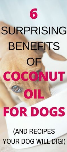 Is coconut oil good for dogs? Yes! You can use coconut oil for dogs to alleviate or heal many common health issues. Read this guide on the Benefits of Coconut Oil For Dogs and learn how to use it (including our favorite coconut oil dog treat recipes!).