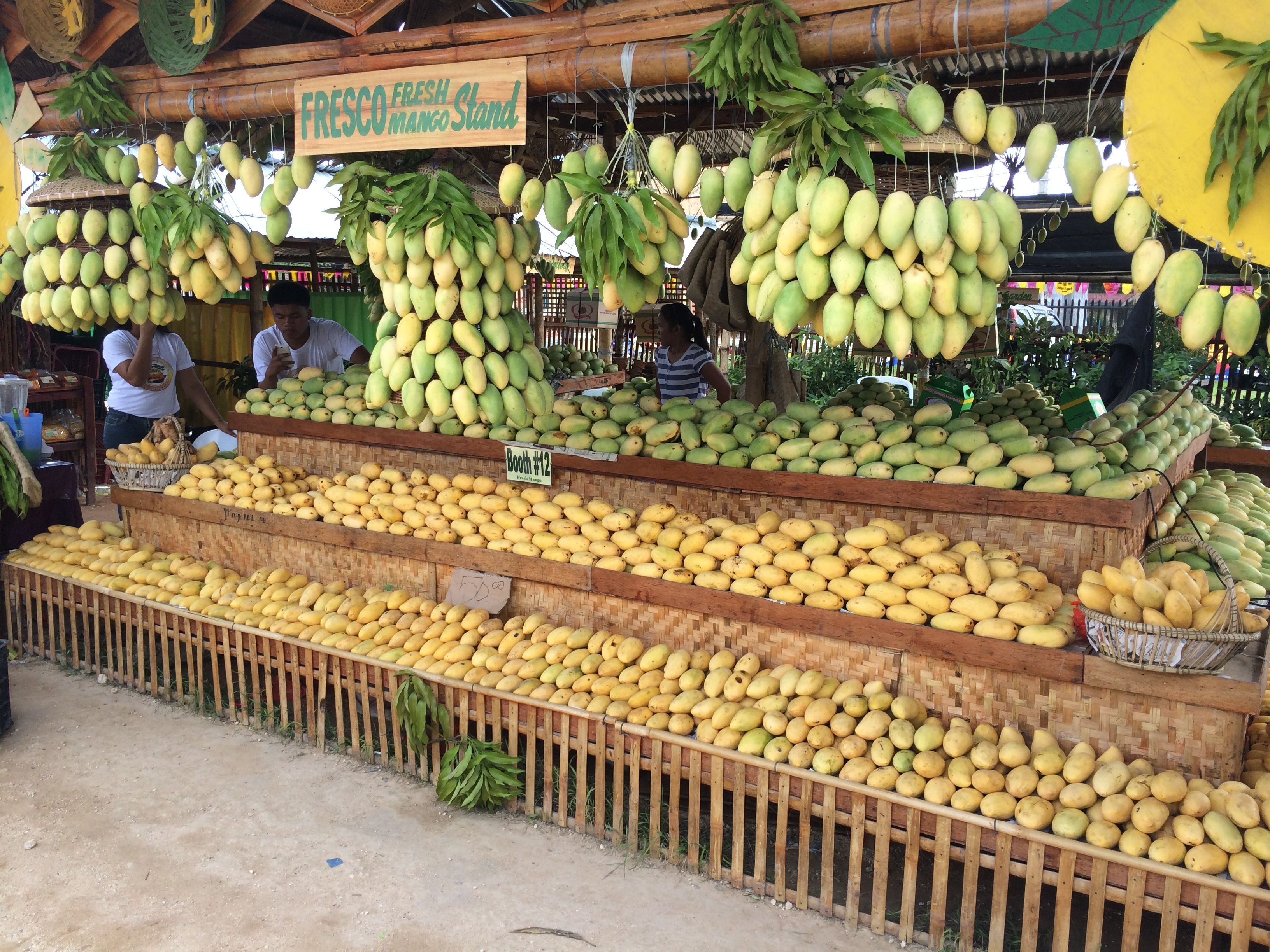 Guimaras, Philippines  Mango Festival All You Can Eat For Under $2
