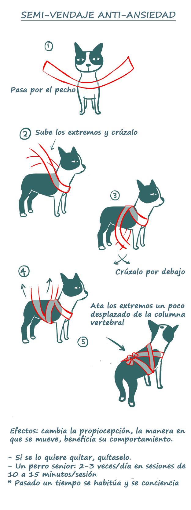 Photo of Vendaje terapéutico y antienvejecimiento para perros: