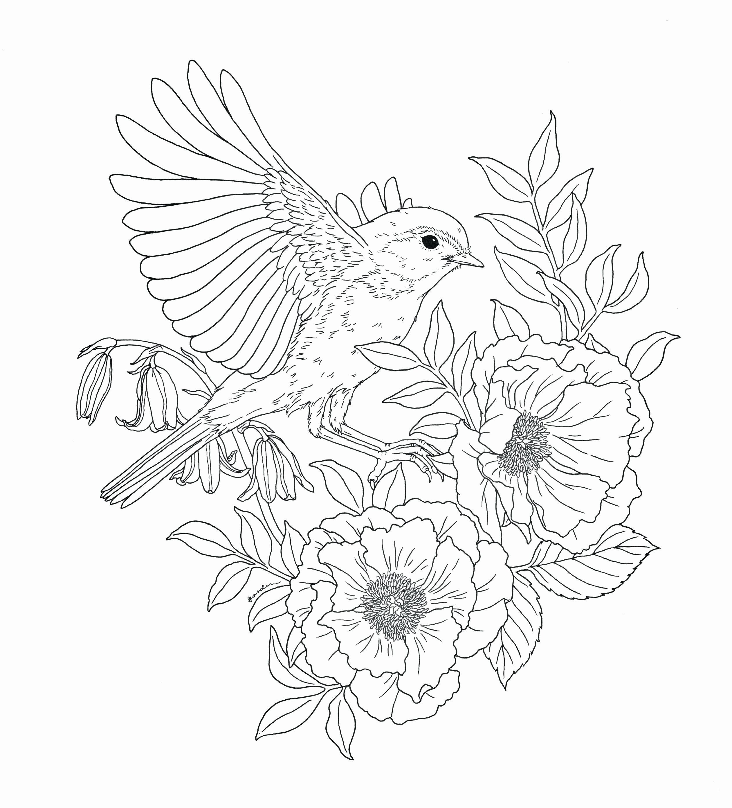 Nature Adult Coloring Pages Elegant Pixie Hollow Coloring