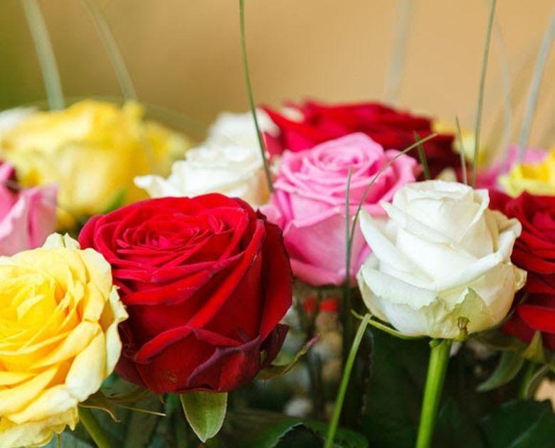 Arti Gambar Bunga Mawar Ternyata Warna Pada Bunga Mawar Punya Arti Yang Berbeda Beda Jangan Sembarangan Kenali 8 Makna Warna Mawar S Gambar Bunga Mawar Bunga