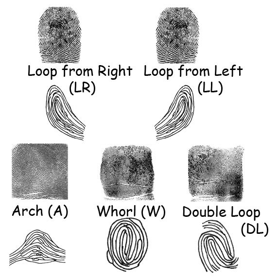 The Science oF Fingerprints Young people love doing