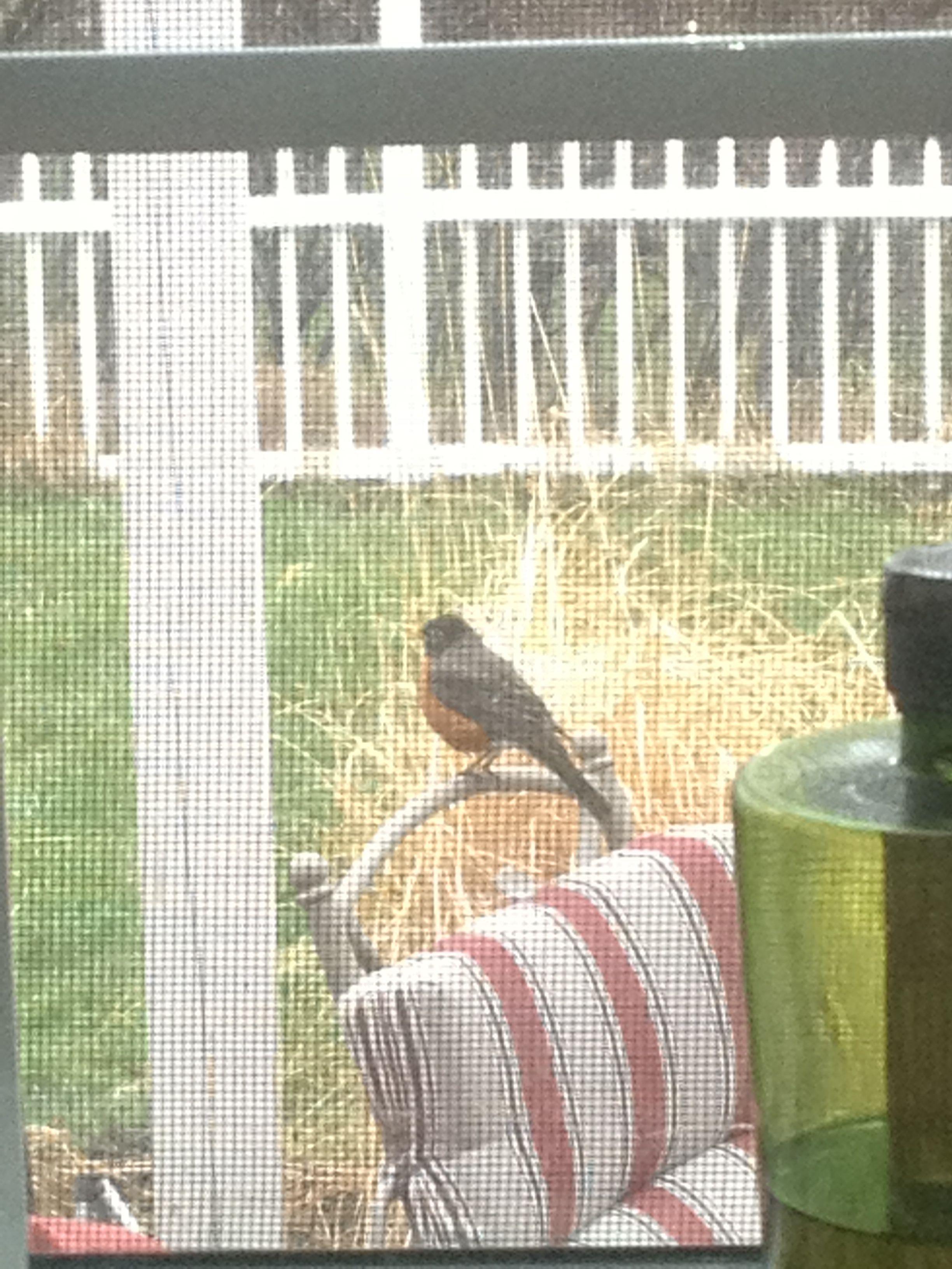A pregnant bird outside...