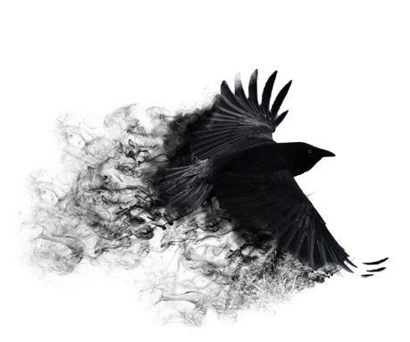 Smoke Crow Crow Tattoo Raven Tattoo Abstract Wallpaper