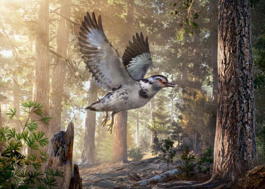 'Messy' New Species of DinosaurEra Bird Discovered