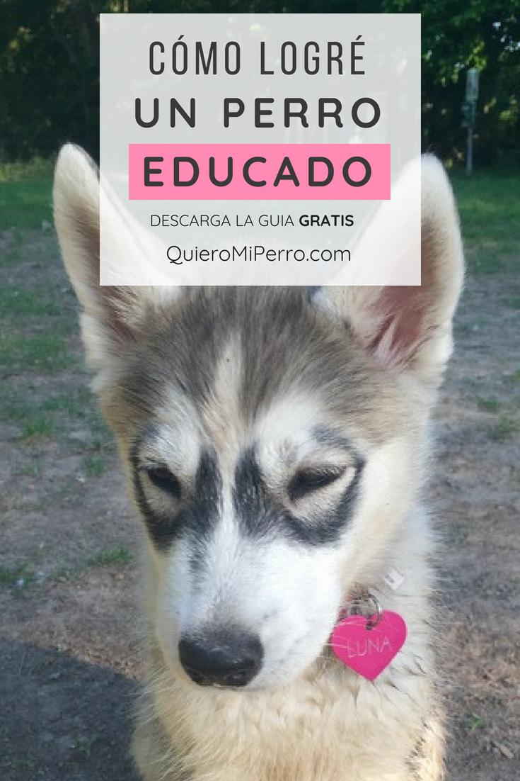 Fotos Reales De Perros Callejeros O En Condición De Calle Historias De Rescate Animal Y Adopcion De Perros Perr Adoptar Un Perro Perros En Adopcion Perros