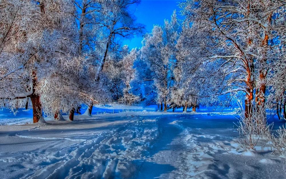 Зимняя красота картинки: 5 тыс изображений найдено в ...