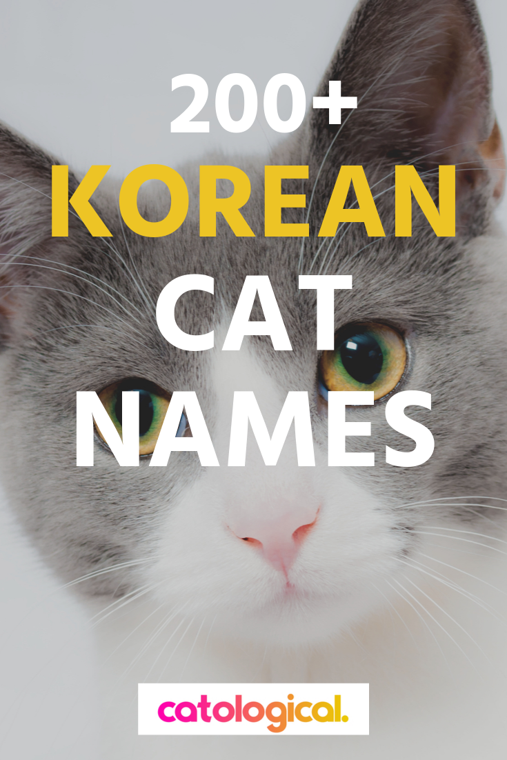 200 Amazing Korean Cat Names With Their Meanings For Male And Female Kitties In 2020 Cat Names Funny Cat Names Names For Black Cats