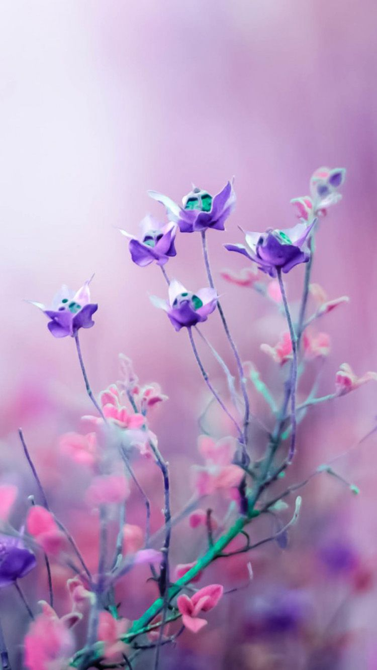 Purple And Pink Flower Iphone 6 Wallpaper Wallpaper Pinterest
