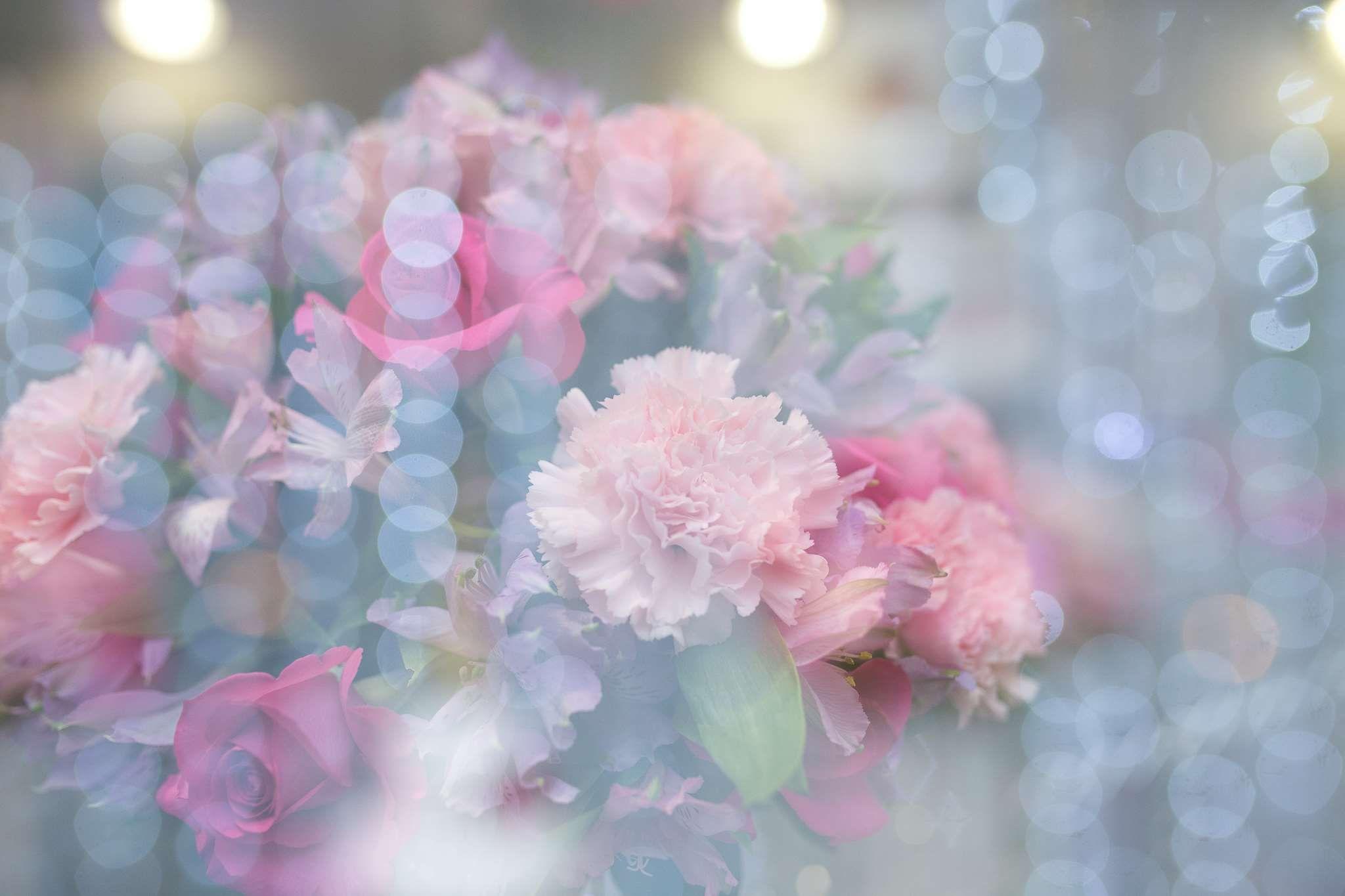 Beautiful beautiful flowers bloom blooming blossom blur bokeh beautiful beautiful flowers bloom blooming blossom blur bokeh izmirmasajfo Images