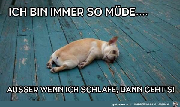 Ich Bin Immer So Muede Mude Lustig Lustige Hund Meme Lustige Bilder