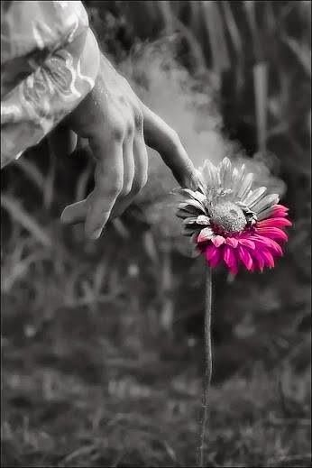 Just a touch of color ✿⊱╮