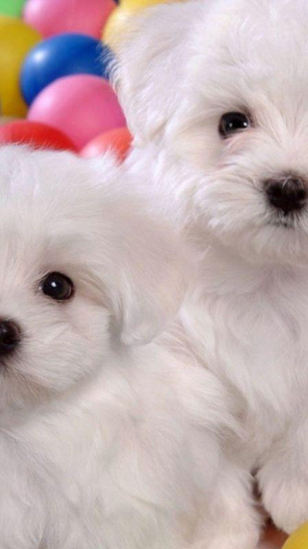 Puppies iPhone Wallpaper HD
