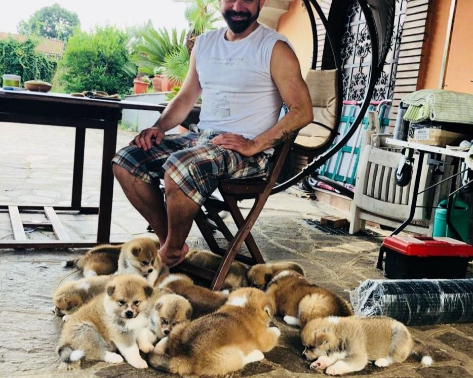 Cuccioli Di Akita In Regalo.Roma Cuccioli Di Akita Fulvi I 40gg Disponibili Vendita