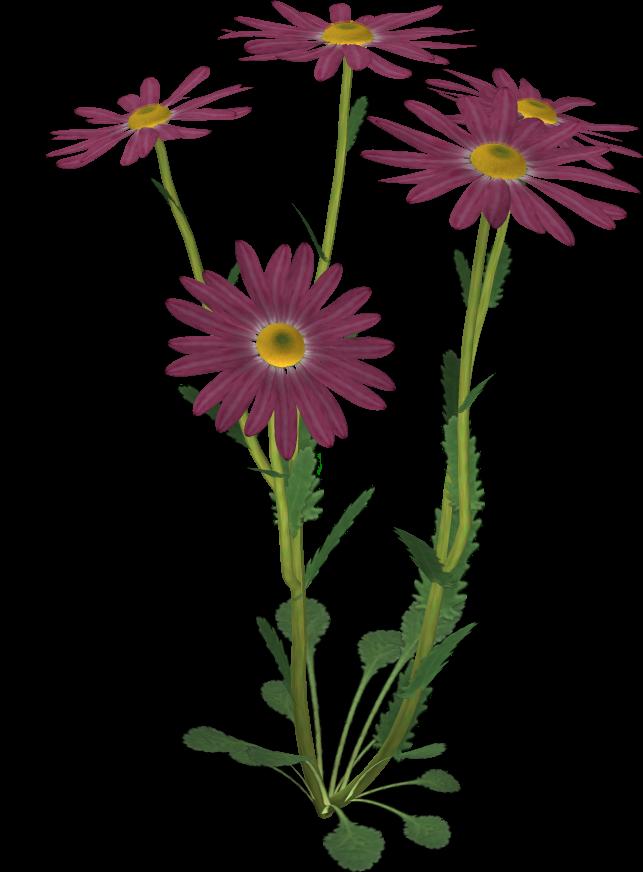 Flower 8 by Twins72-Stocks on DeviantArt