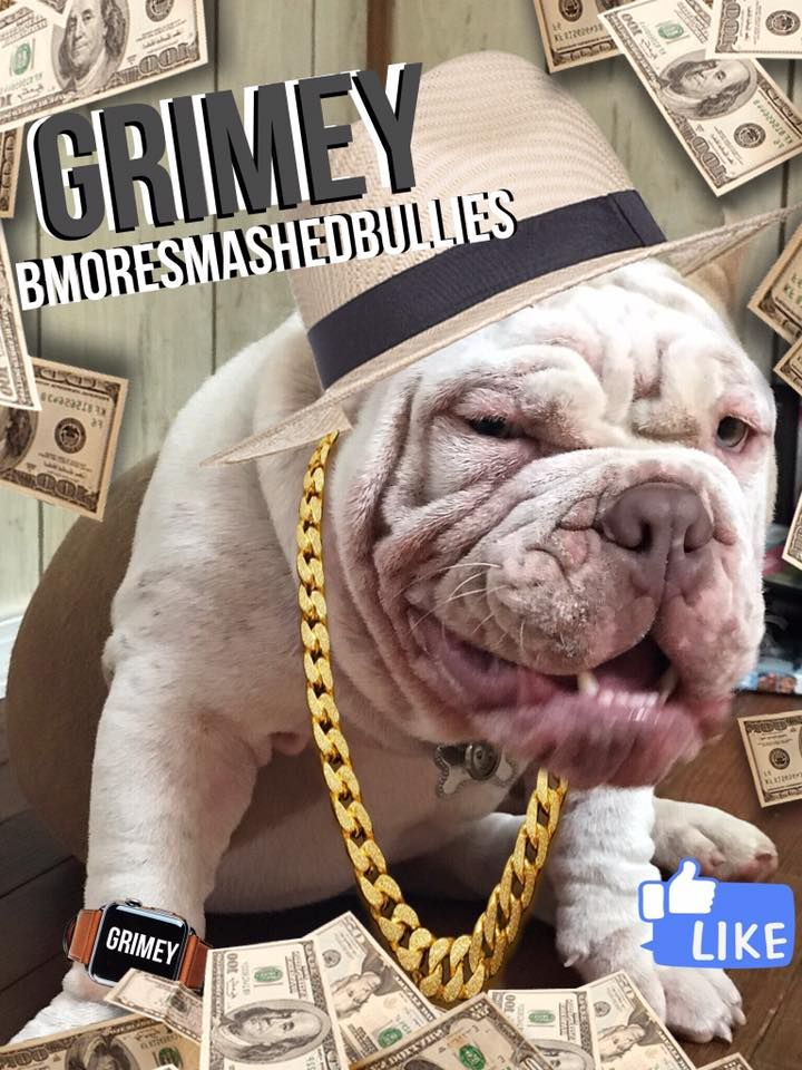Grimey Og Ain T Nuthin But A G Thaaang Bulldog French