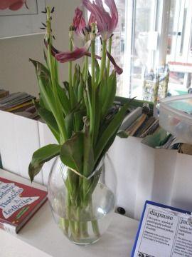 Day 34: Dead Tulips