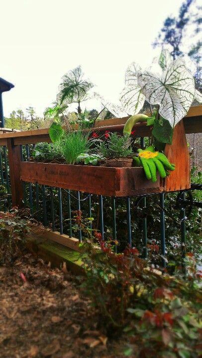 Easiest & best looking way of gardening or hanging plants ...