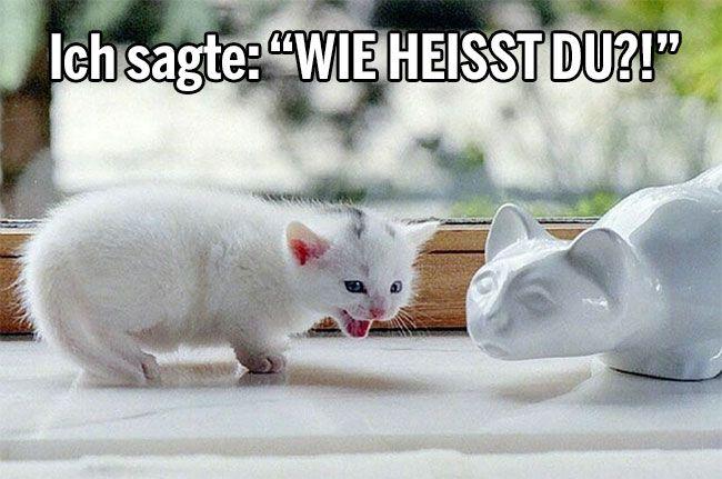 Jetzt Sag Doch Etwas! (tiere Bilder)  Tags Babykatze