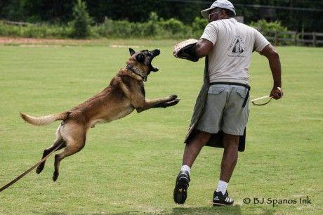 Beautifully Photographed Shutzhund Training Art Of Schutzhund