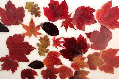 laminated autumn leaf magnets