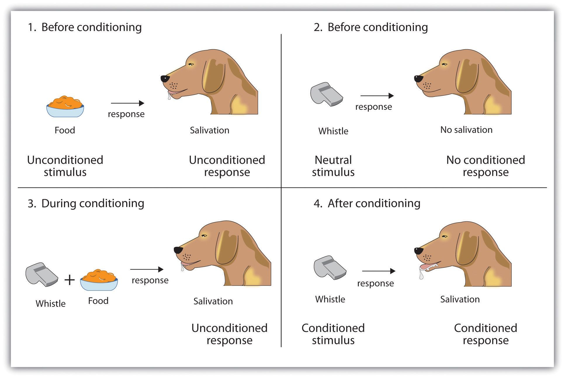 Response to stimuli, how dogs respond to basic situations ...