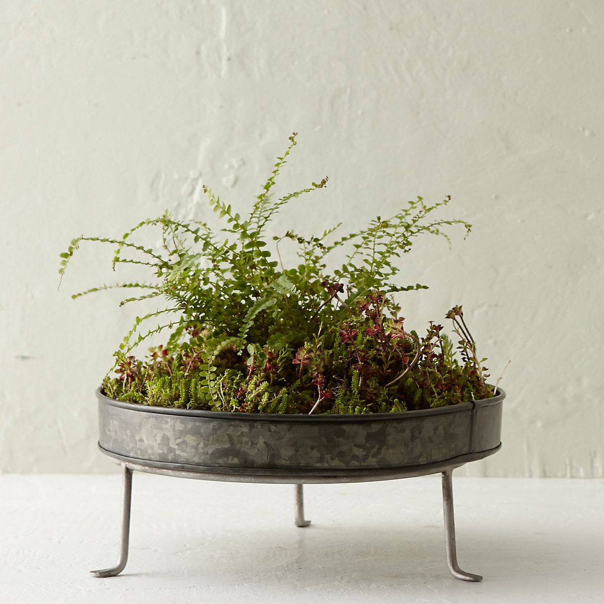 Silver Footed Low Plant Stand 5 12 In Garden Stands At Terrain