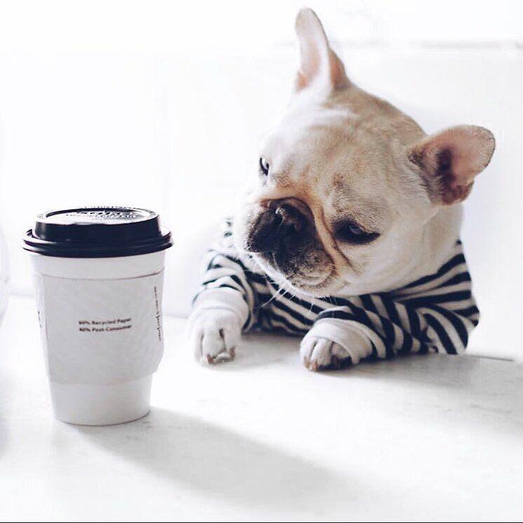 Happy Humpday Ganggg Is It Friday Yet Nafia French Bulldog Puppies Bulldog Bulldog Puppies