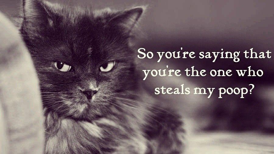 First world cat is incredulous. litterbox, cat, meme