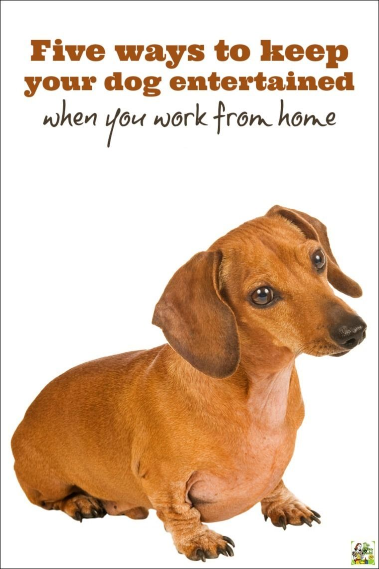Five Ways To Keep Your Dog Entertained When You Work From Home